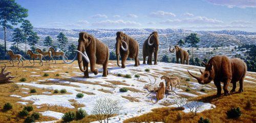 Ice Age MegaFauna